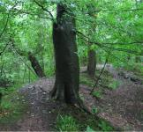 An image of Avon Valley Woodlands
